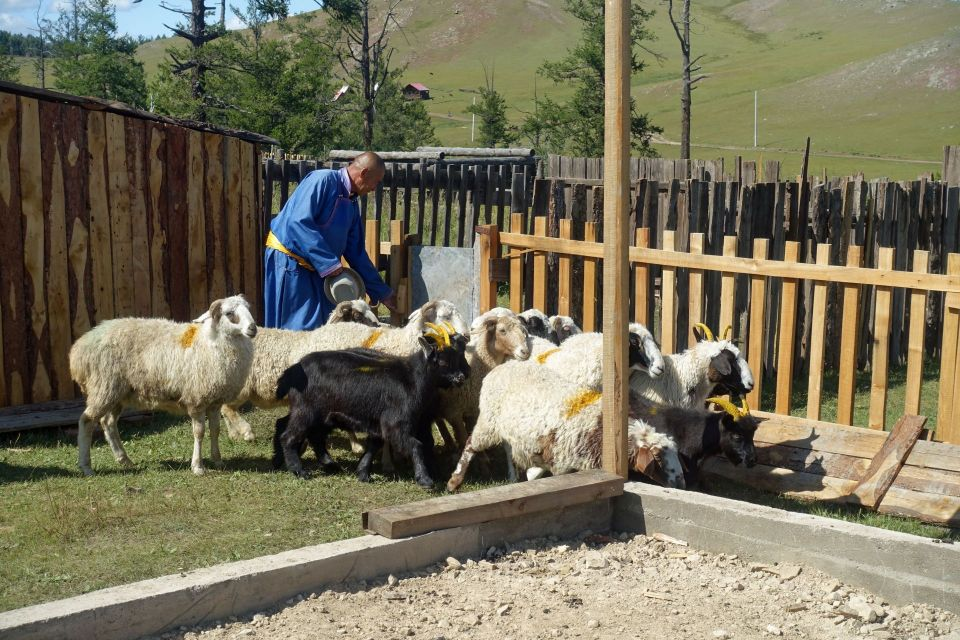 Jigmed wearing bright blue inside of the fenced in area for the rescued animals with sheep and goats around him.