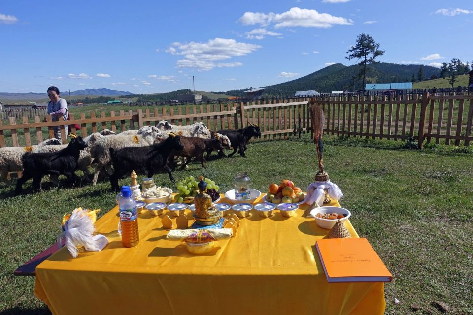 A small herd of goats and sheep walking in a field inside of a fence with a table covered with a yellow cloth holy objects and offerings in the center of the field.
