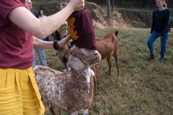 The Animal Liberation Sanctuary, Nepal: Saving Animals from Untimely Death