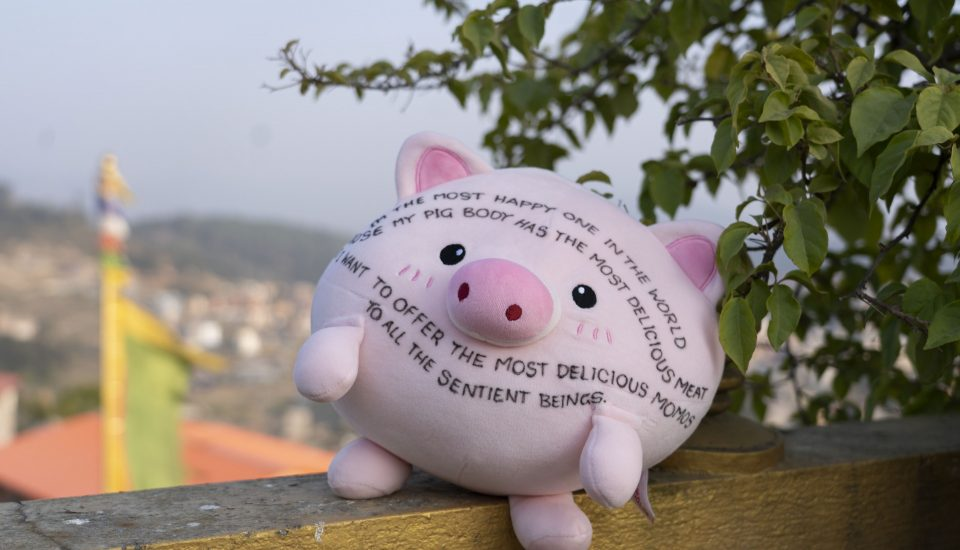 Stuffed pig plush toy with Dharma message sitting on banister with Kathmandu in the background
