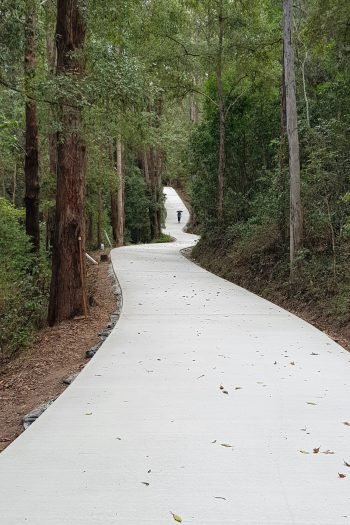 A long smooth winding light colored path winding between a forest of tall trees.