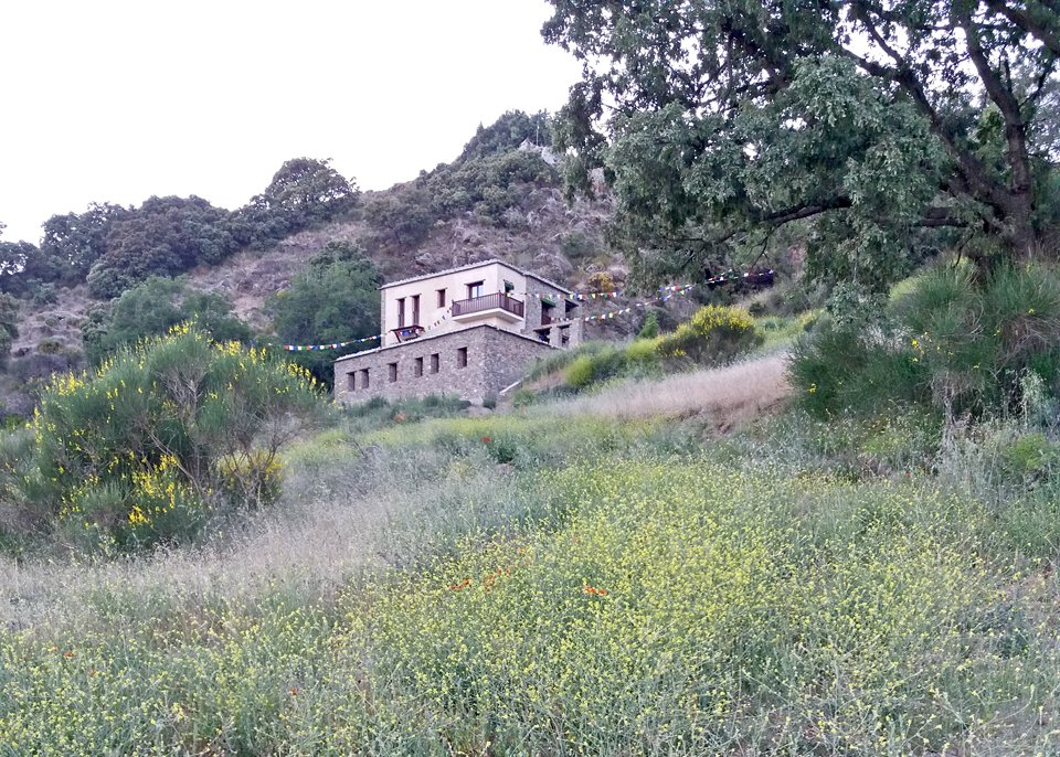view of wildflowers in foreground looking up to a building with prayer flags on a hill
