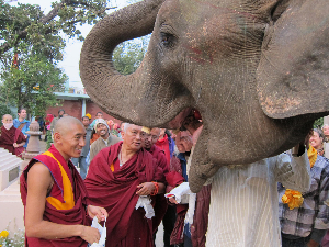 LZR elephant blessing Root 0112