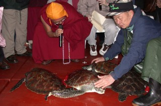 Lama Zopa Rinpoche blessing turtles.