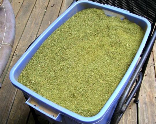 Juniper powder incense in tub. Photo courtesy of Christopher Baranski.