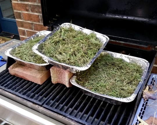 Baking eastern red cedar needles. Photo by Christopher Baranski.
