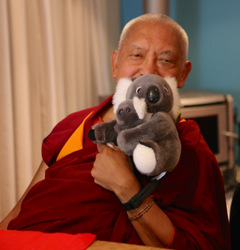 Lama Zopa Rinpoche with koalas, Blue Mountains, NSW, Australia, June 2015. Photo by Ven. Thubten Kunsang