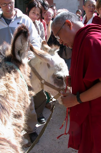 France IVY Rinpoche blessing donkeys
