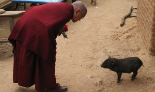 For Lama Zopa Rinpoche, all living beings are most precious.