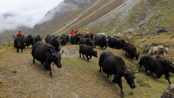 108 Yaks: A Journey of Love and Freedom