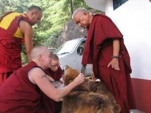 Lama Zopa Rinpoche blesses Tushita's dogs, May 25, 2013. Photo courtesy of Tushita Meditation Centre via Facebook.