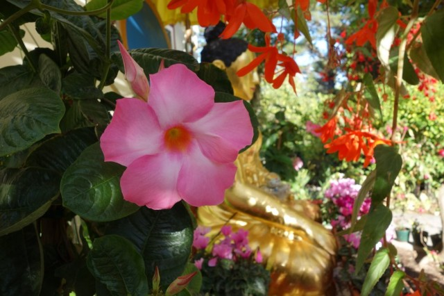 Flowers in garden at Kachoe Dechen Ling, Aptos, California, October 18, 2013. Photo by Ven. Roger Kunsang.