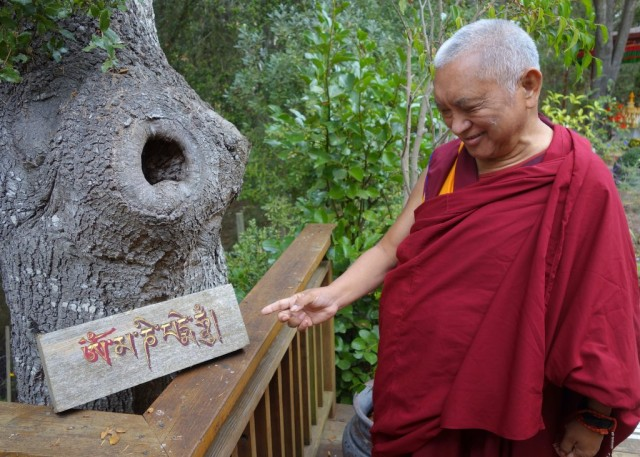 Lama Zopa Rinpoche at Kachoe Dechen Ling, Aptos, California, November 16, 2013. Photo by Ven. Roger Kunsang.