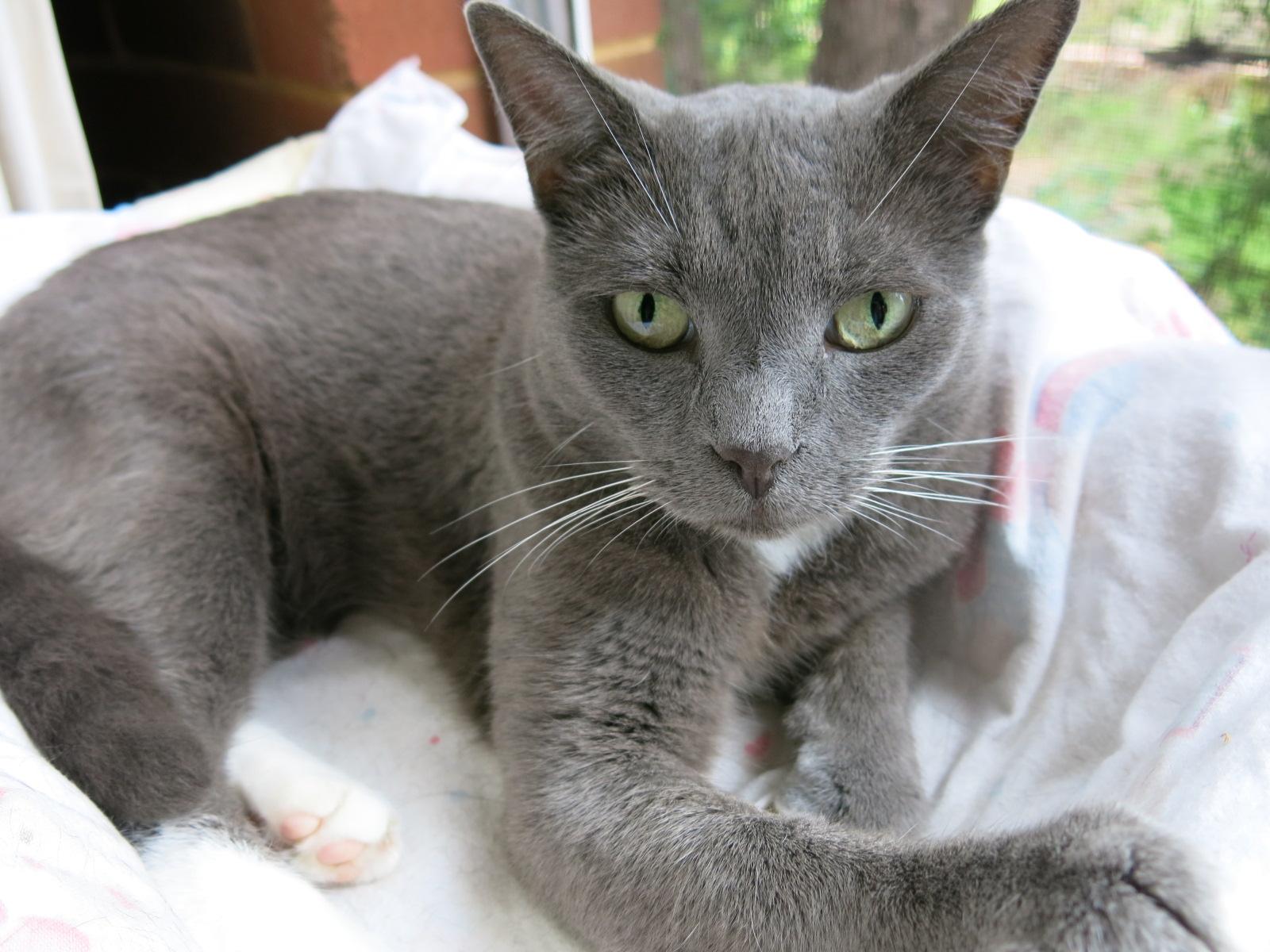 A Buddhistu0027s Loss Of A Beloved Pet