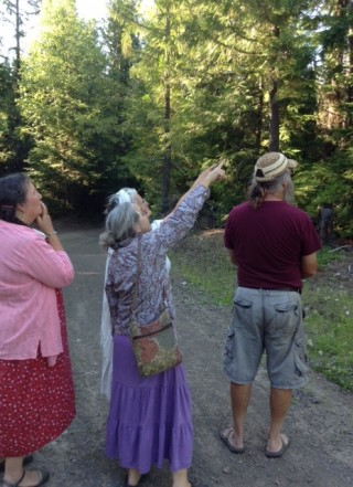 Looking for the fragrant life tree, July 2013. Photo courtesy of Su Ianniello.