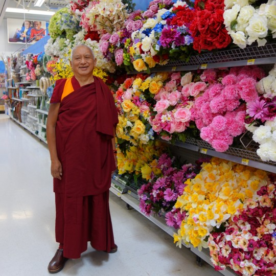 Lama Zopa Rinpoche shopping for flowers for offerings, Washington, US, April 2014. Photo by Ven. Roger Kunsang.