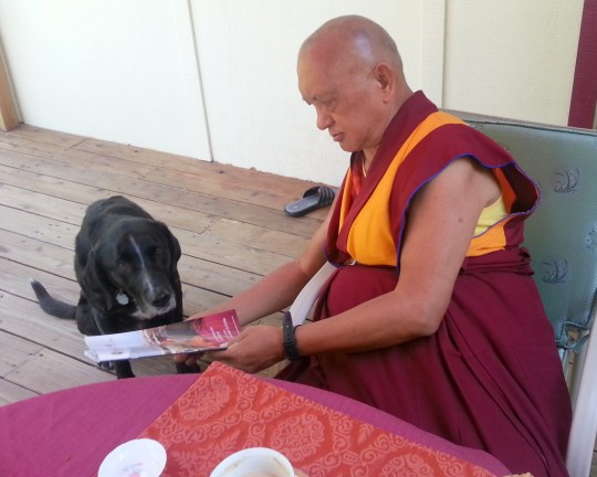 Even Rinpoche's dog Uma enjoys checking out the new issue of Mandala, Kachoe Dechen Ling, California, US, June 2014. Photo by Ven. Holly Ansett.