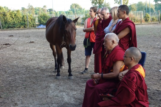 Lama Zopa Rinpoche spent three hours at the animal sanctuary, blessing the animals, which had been rescued from slaughter, and explaining how to help the animals from the spiritual side, Fattoria della Pace Ippoasi, Italy, June 2014. Photo by Ven. Roger.