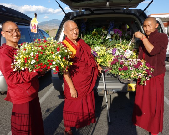 Lama Zopa Rinpoche after shopping for flowers with Vens. Sherab and Sangpo, Washington, US, July 2014. Photo by Ven. Roger Kunsang.