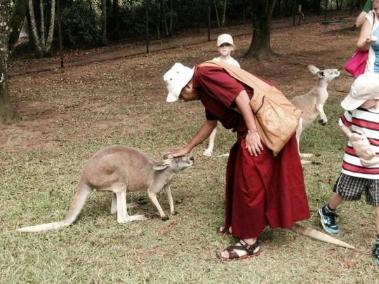 Geshe Sherab Kangaroo