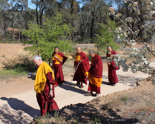 Lama Zopa Rinpoche walking to the Great Stupa of Universal Compassion with Khen Rinpche Geshe Chonyi and Vens. Roger Kunsang, Sangpo and Sherab, Australia, September 19, 2014. Photo by Laura Miller.