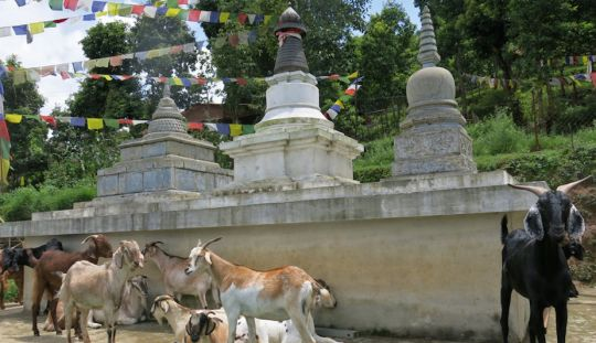 Grant for Animal Liberation Sanctuary, Nepal, Issued Again this Year