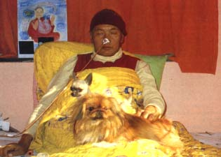 Lama in Delhi with his Chihuahua Lama and Pekinese Yeshe, late December.